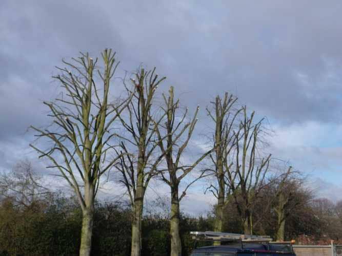 cherry-picker-pruning-10-case-study-arbex-tree-surgeons
