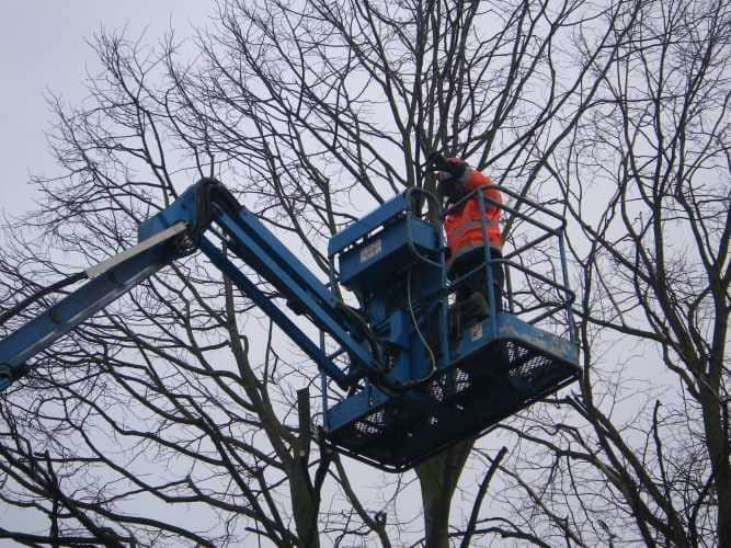 cherry-picker-pruning-2-case-study-arbex-tree-surgeons
