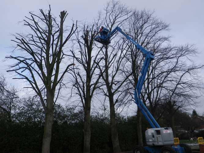 cherry-picker-pruning-7-case-study-arbex-tree-surgeons