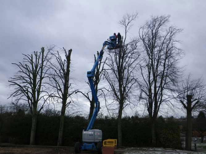 cherry-picker-pruning-9-case-study-arbex-tree-surgeons