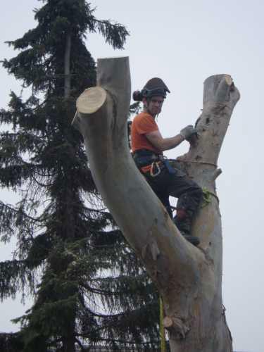 eucalyptus-removal-8-case-study-arbex-tree-surgeons