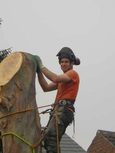 eucalyptus-removal-9-case-study-arbex-tree-surgeons