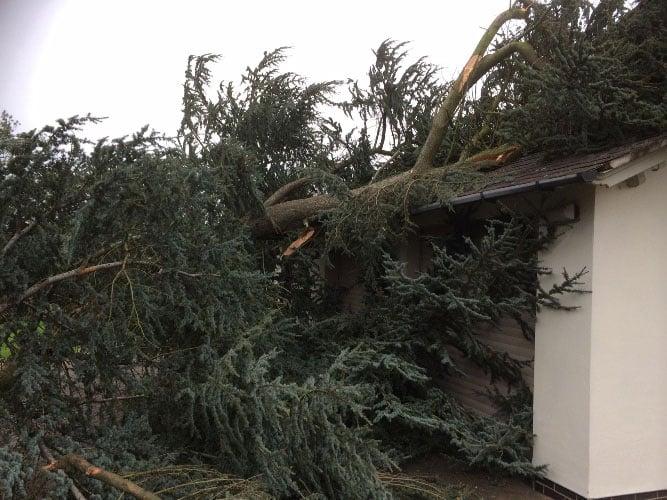 fallen-cedar-tree-removal-2-case-study-arbex-tree-surgeons