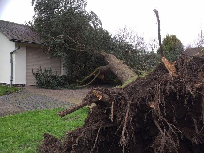 fallen-cedar-tree-removal-case-study-arbex-tree-surgeons