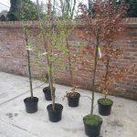 tree-planting-case-study-arbex-tree-surgeons